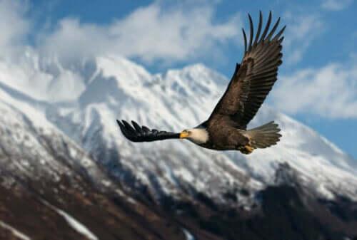 Gündüz Yırtıcı Kuşları, Zirvelerin Hükümdarları