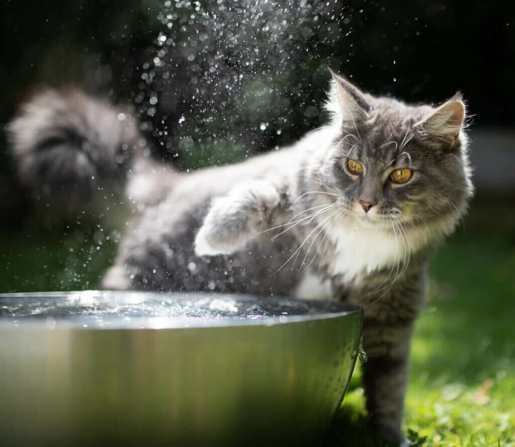 kedilerin tüyleri, su geçirmez tüyler