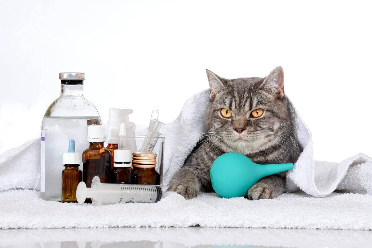 Hasta bir kedi
