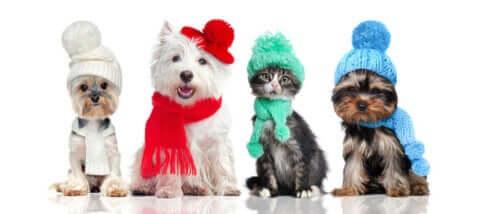 Hayvanlarda termoregülasyon ve kıyafetler ilişkisi.