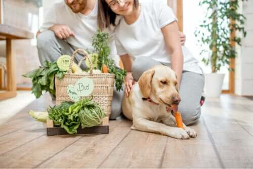 Köpek ihtiyaç duyduğu besinleri alıyor.
