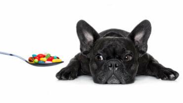Köpeğiniz için Gerekli Olan Vitaminler