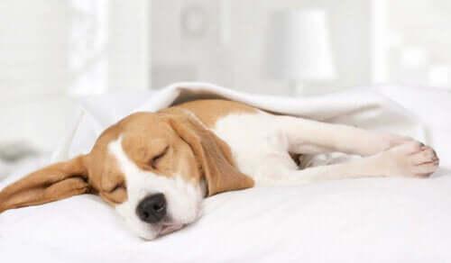 Bir köpek uyuyor.
