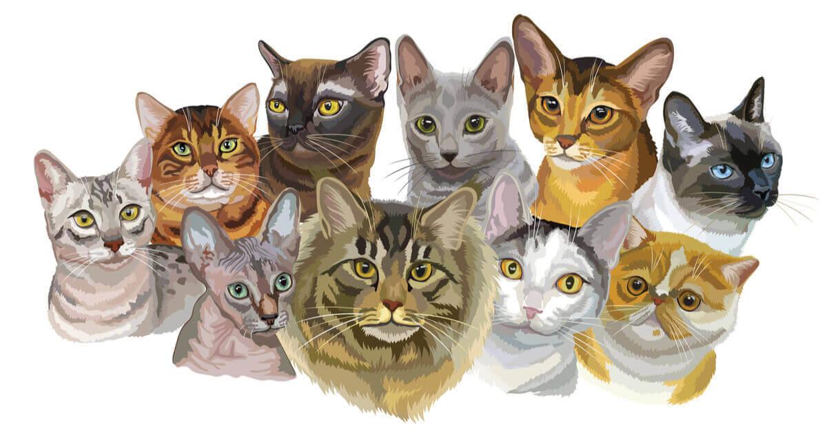 10 tane kedinin çizimi
