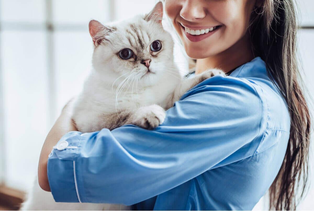 Bir kedi ve veteriner