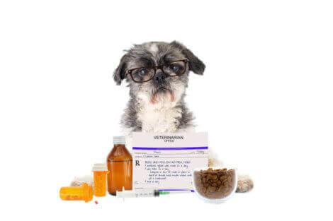 köpekler için en tehlikeli ilaçlar