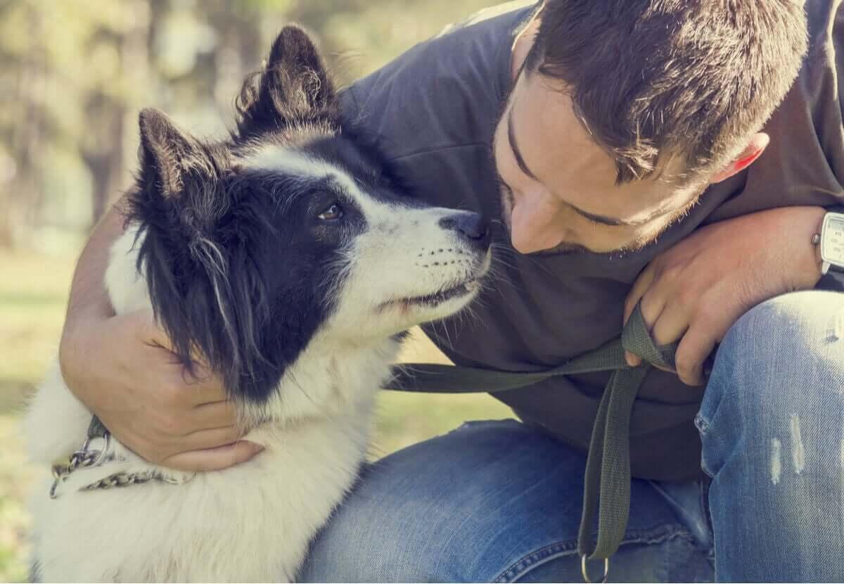 siyah beyaz köpek ve insan dostu