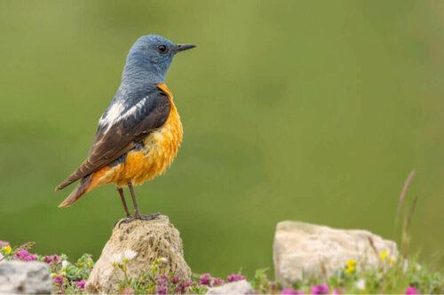 Guadarrama Milli Parkı Faunası