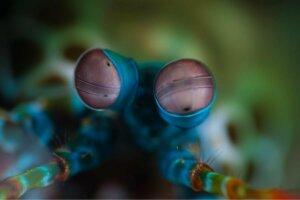 karidesin gözlerinin yakından fotoğrafı