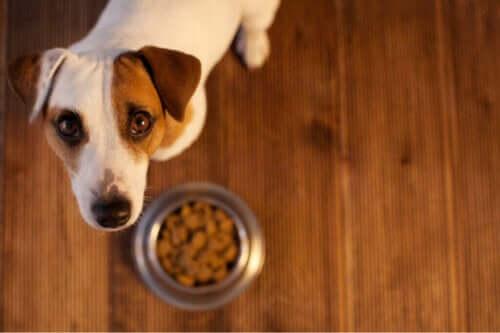 Evcil Hayvanlarda Gıda Alerjisi: Nasıl Anlarsınız?