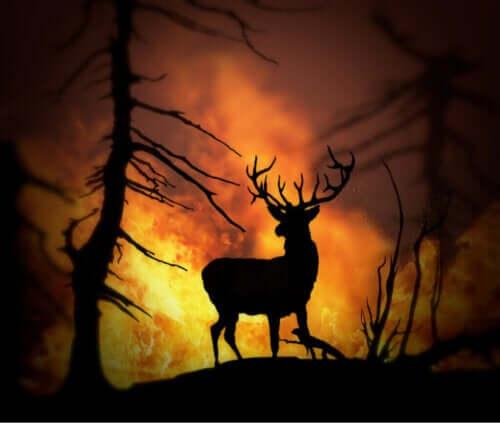 Kurtarılan Hayvanlar - Orman Yangınları