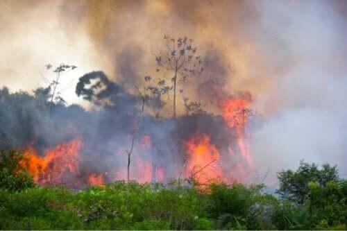 Orman yangınları birçok felakete yol açabilir.