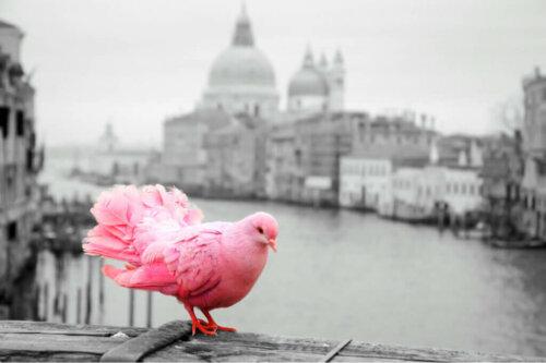 Gürültü Kirliliği: Kuşların En Büyük Düşmanlarından Biri