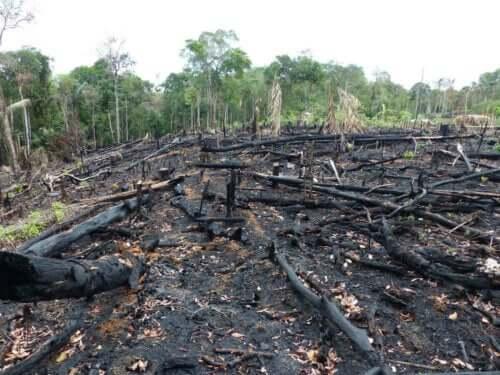 Söndürülmüş orman yangınından sonra geriye kalanlar.