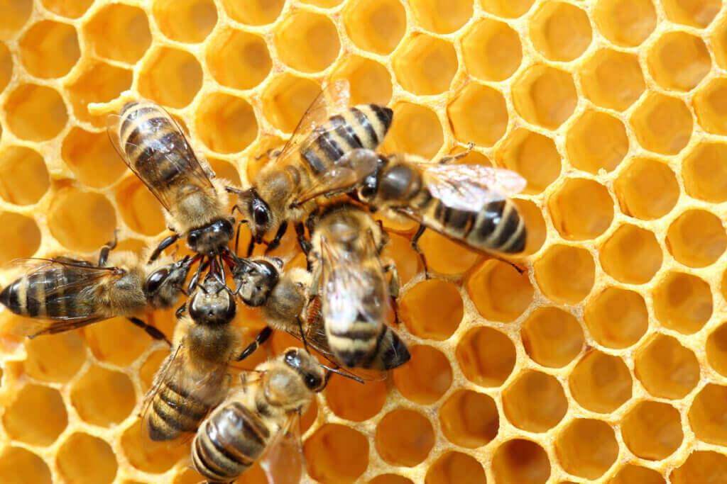 Sallanma Dansı: Arıların Dansı