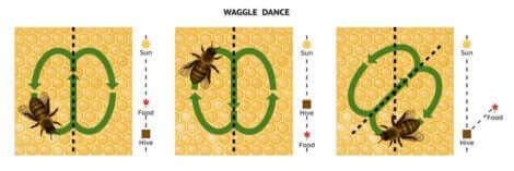 sallanma dansı şeması