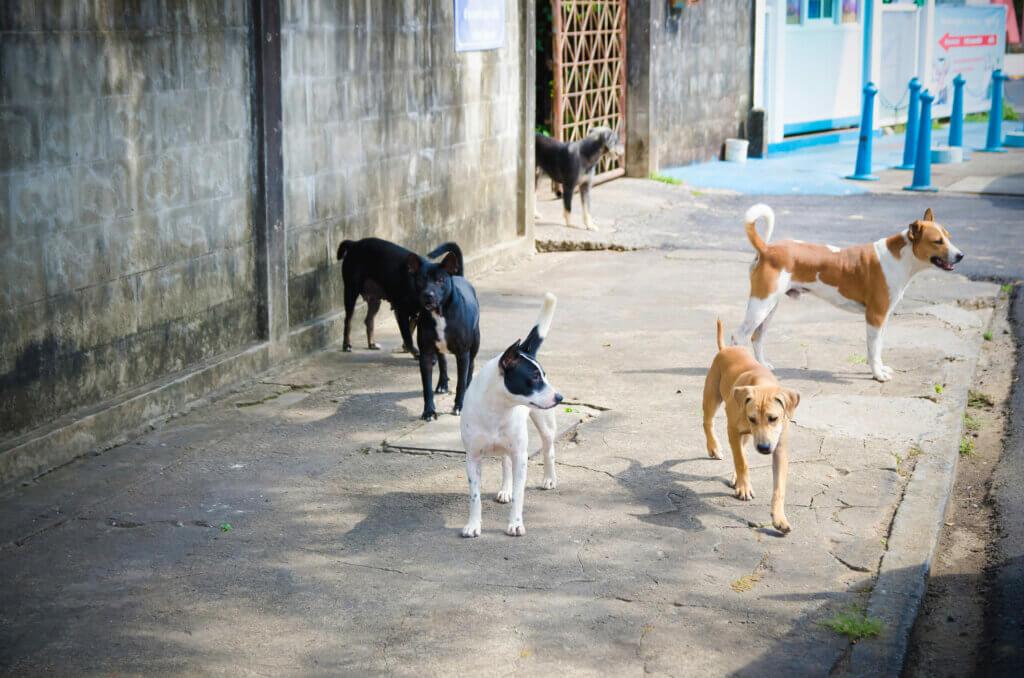 Beyrut Patlamasından Sonra Kayıp Köpeklerin İzinde