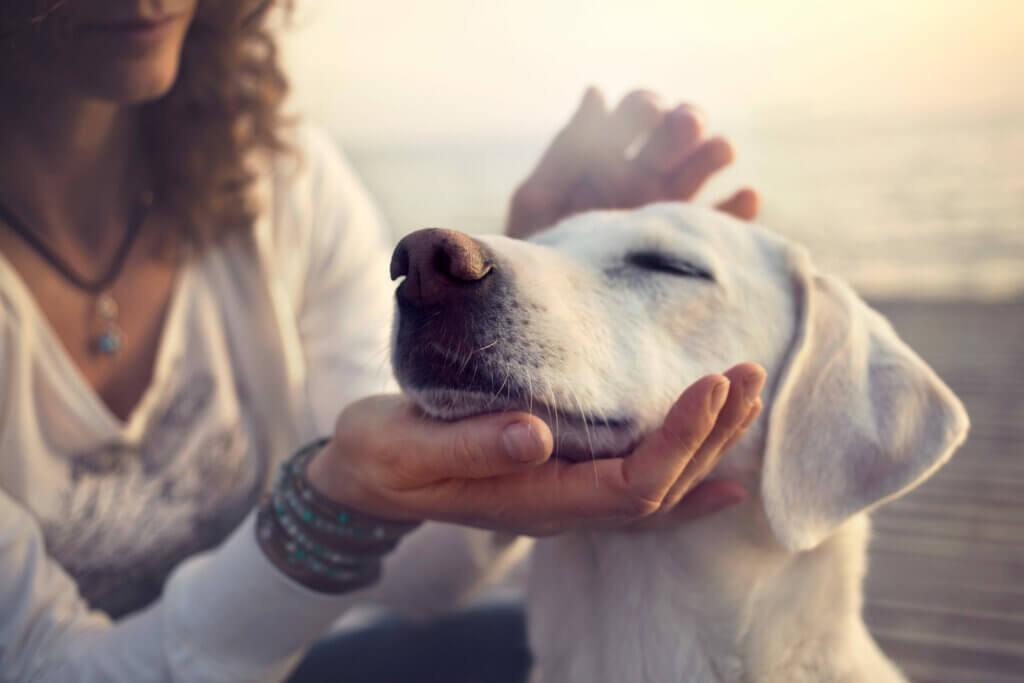 Evcil Hayvanlarda Solunum Güçlüğü: Dispne