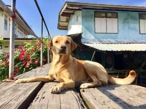 Evcil Hayvanlar İçin Komşuluk Kuralları