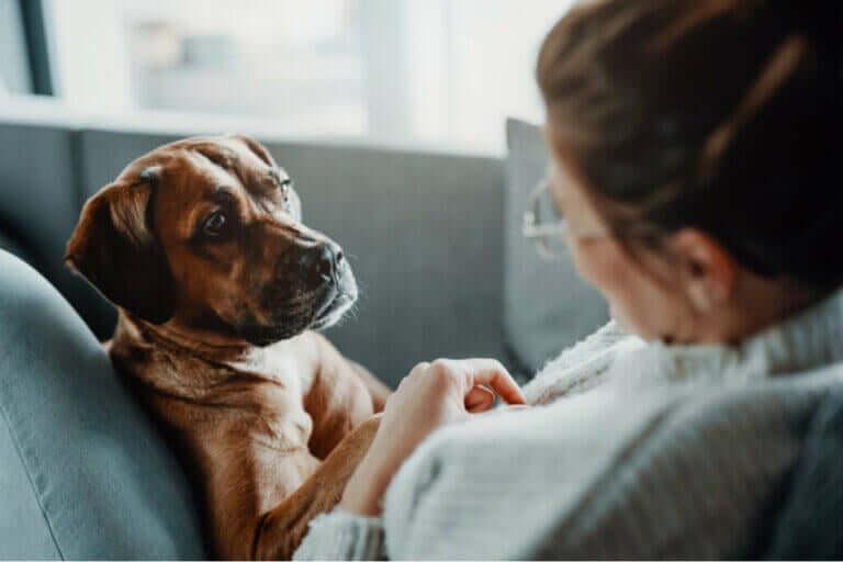 Köpeklerde Solunum Güçlüğü Yaratan Hastalıklar