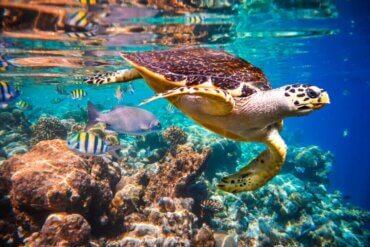 Okyanus Akıntıları Deniz Faunasını Nasıl Etkiler?