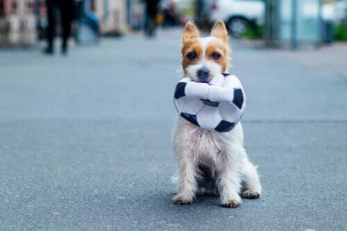 Köpek ve top.
