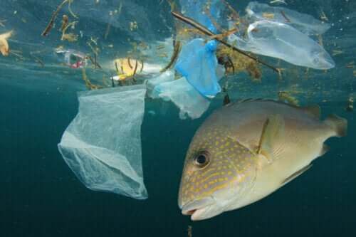 Suların Kirlenmesi Ve Balıklar: Nasıl Etkileniyorlar?