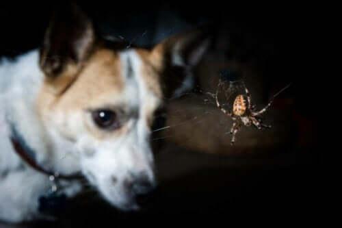 Köpeklerde Zehirli Isırıklar ve Semptomları