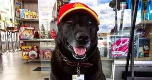 Benzin İstasyonu Köpeği Negão ile tanışın