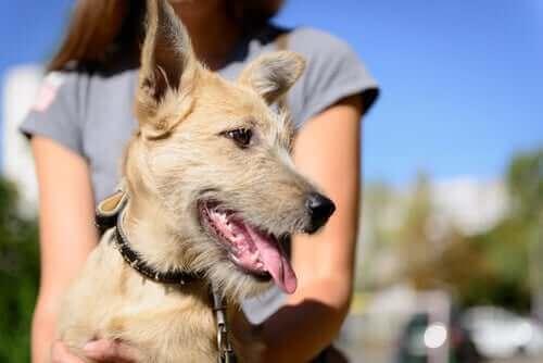 Bir Köpeği Sahiplenmek? Yasalara Uyduğunuzdan Emin Olun