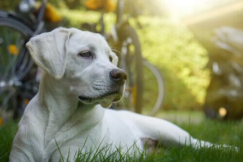 Köpek türleri ve yaşadıkları yerler.