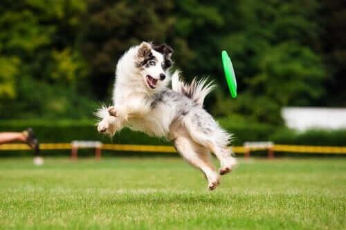 Köpeğinizin Egzersiz Yapmasının Faydaları