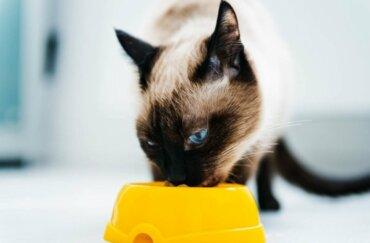 Kedilerde Beslenme: Kedileri Diyete Başlatmak