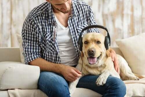 Uzmanlara Göre Köpekler Rock Müziği Seviyor