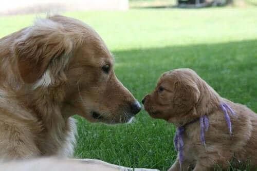 Avidog, Köpeklere ve Yaşlılara Yardım Eden Yeni Bir Ağ