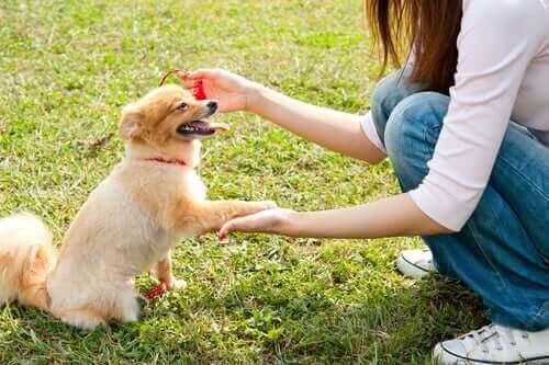 Bir Köpekle İlk Karşılaşma Nasıl Olmalı?
