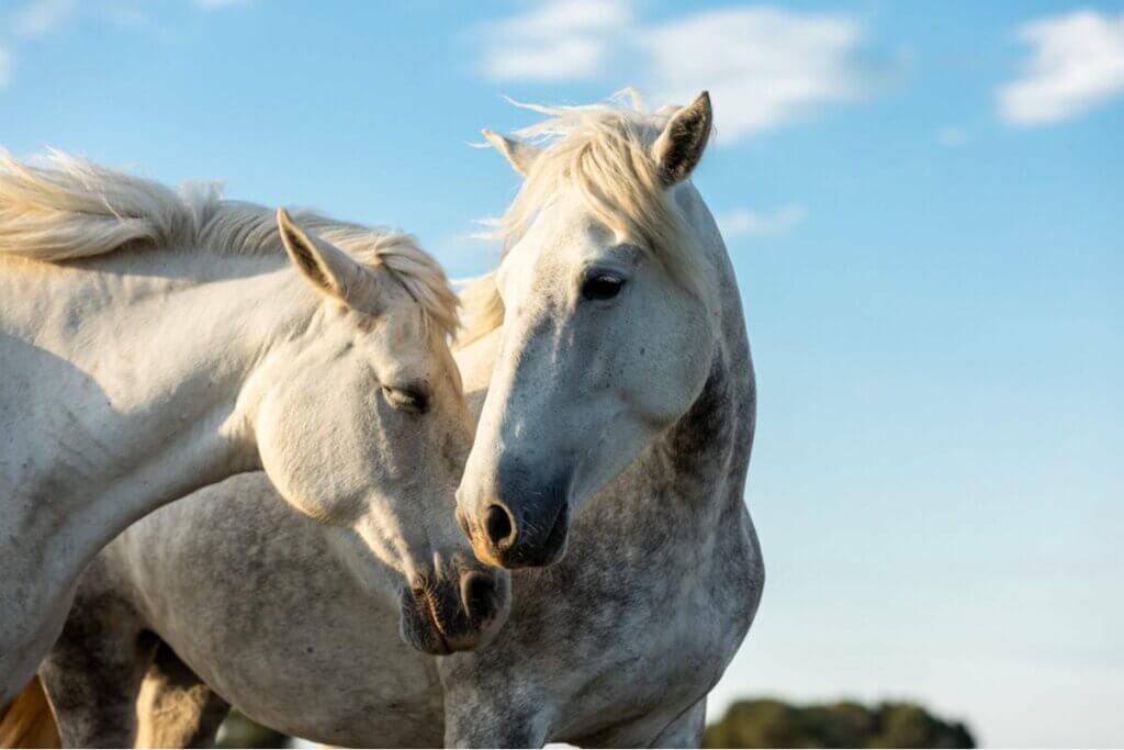 Devlet Kontrolü Altına Alınan İki At Hastalığı