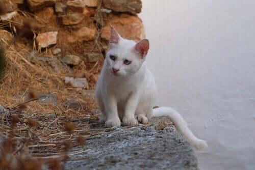 Farklı Kültürlerde Kediler Neyi Temsil Eder?
