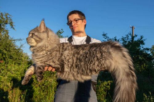 kilo olan kediler, kediler de kilo verme