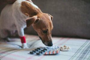 Köpeğinize Aspirin veya Diğer Ağrı Kesiciler Vermeli misiniz?