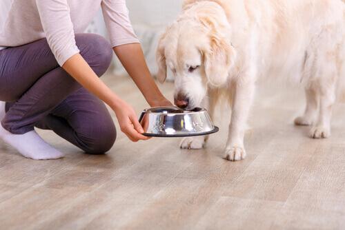 Köpeğiniz için en faydalı yiyecekler.