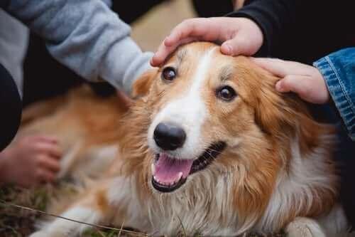 Bir köpekle ilk karşılaşma çok önemli.
