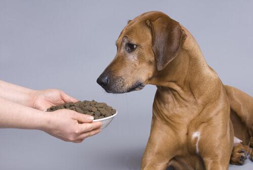 Köpekler yazları neden daha az yer?