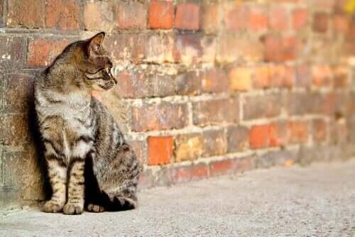 New York'taki Sokak Kedileri İçin Kış Barınakları