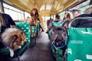 Tur otobüsü ve içinde köpekler