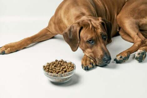 mama yemeyen köpek