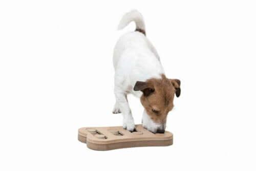 Köpeklerde Zihinsel Uyarım: Bir Oyun Meselesi