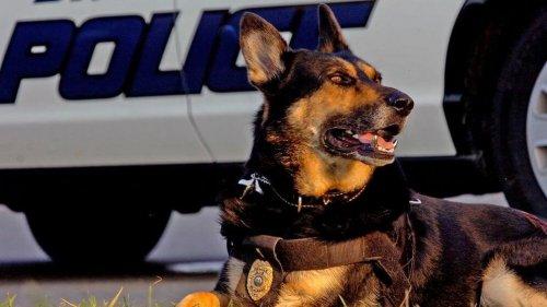 Polis köpekleri ve ilginç hayatları.