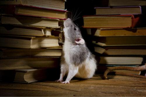 hayvanlar, izler, kitaplar