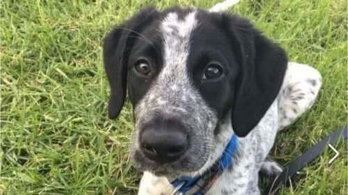 Stajyer Polis Köpeği Grizz'in Trajik Hikayesi